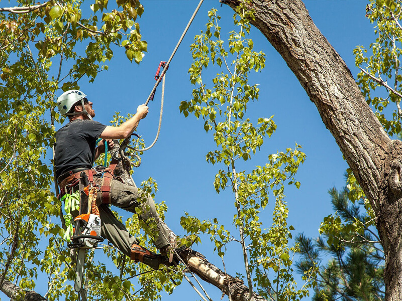 tree trimming spokane