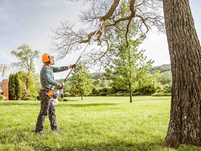 tree trimming services spokane